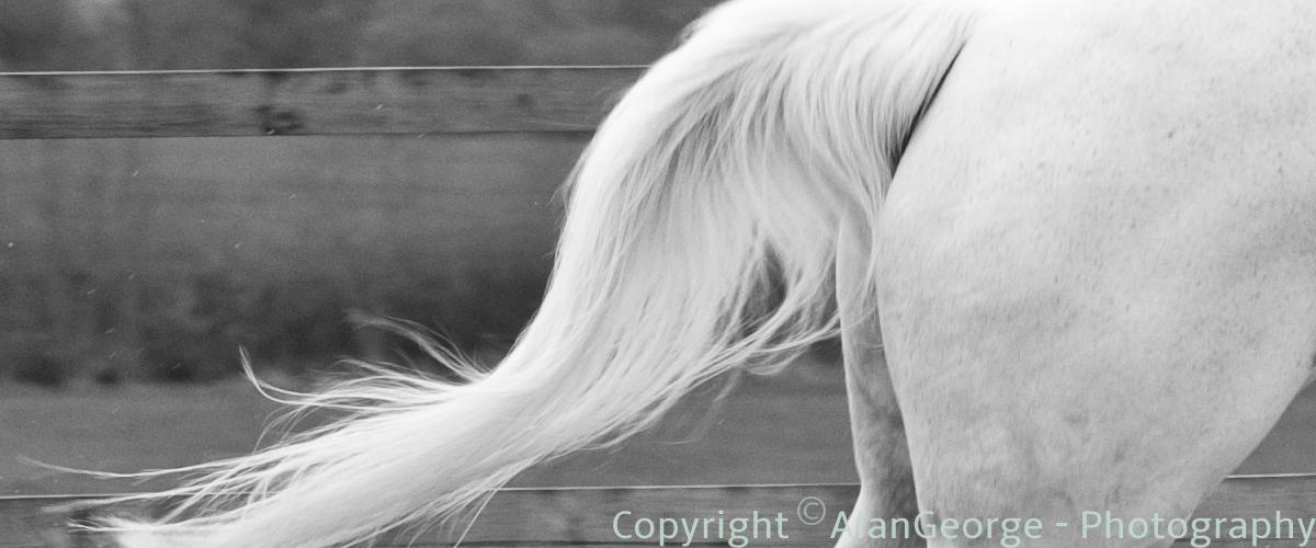 Horses Rear