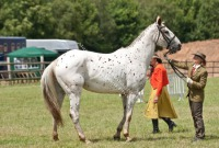 The Royal Show - Appaloosa in Hand